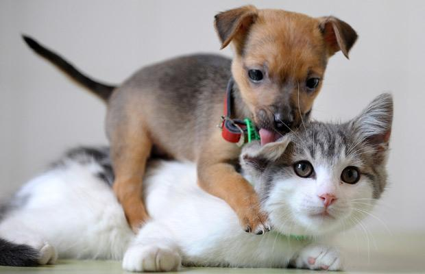 puppy on a kitten